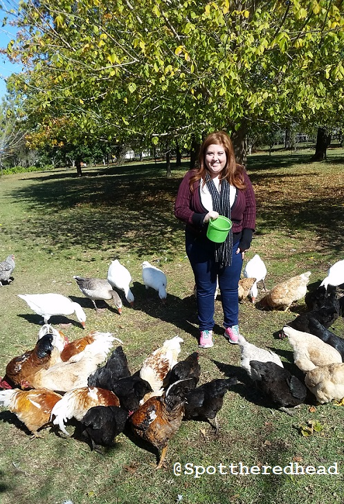 chickens and i