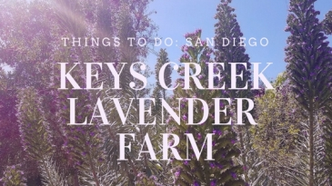 keys creek lavender farm san diego things to do